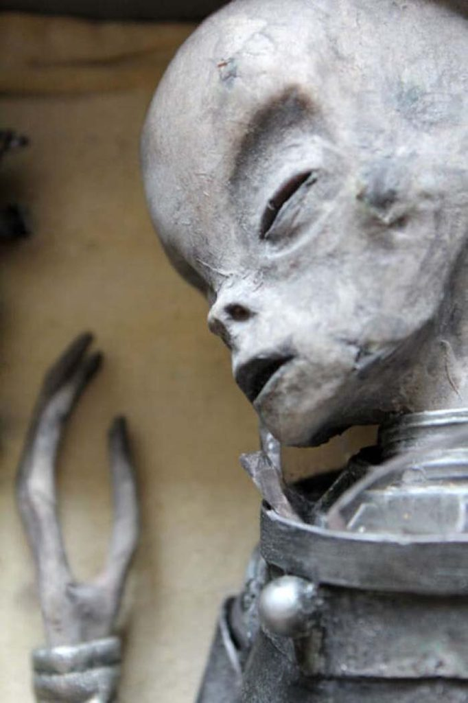 corpo alieno ritrovato nella casella 24