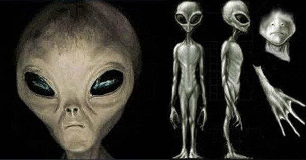 alieni grigi di-zeta-reticuli-e-bellatrix