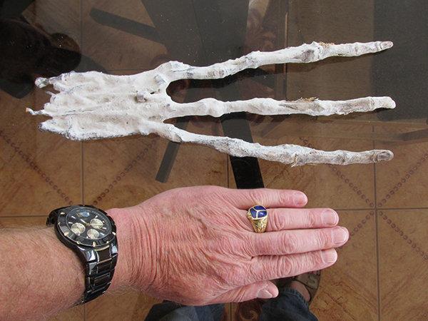 artiglio a confronto con una mano umana