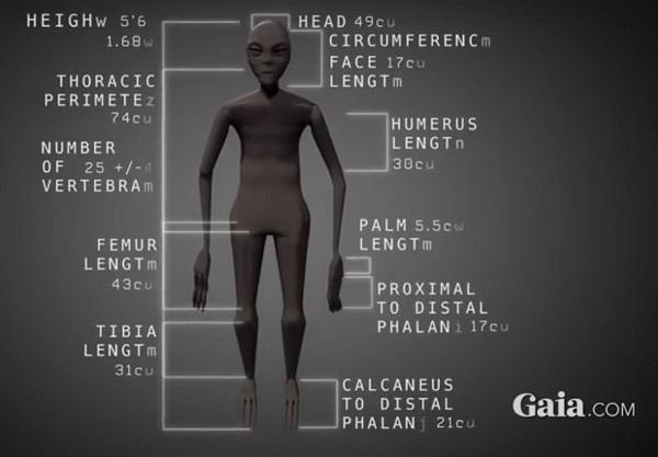 misure mummia aliena
