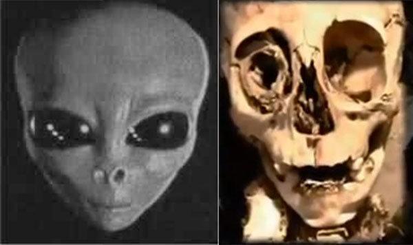 teschi alieni a confronto