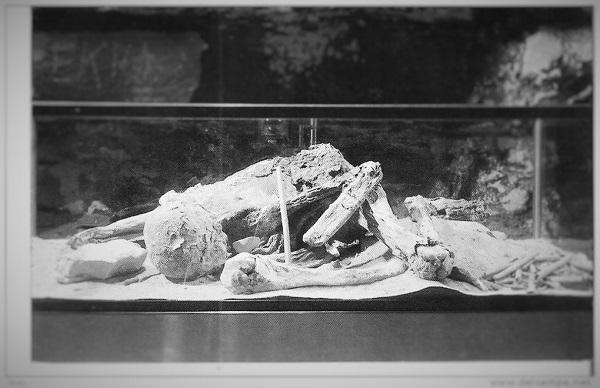 mummia di Fawn Hoof