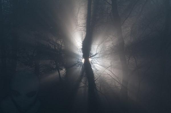 Creature misteriose segnalate lungo il Po