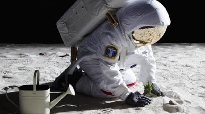 Problemi per le prime piante sulla superficie lunare