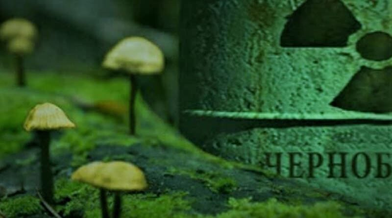 """I funghi mutanti di Chernobyl """"mangiano"""" le radiazioni e generano energia"""