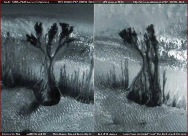 i misteriosi alberi su marte foto nasa